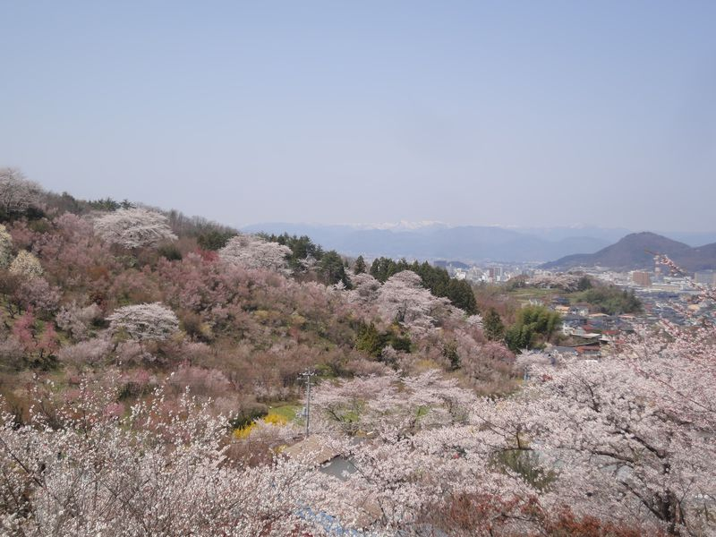 桜前線を追いかけて福島の桃源郷へ 山肌を美しく染める花見山ウォーク