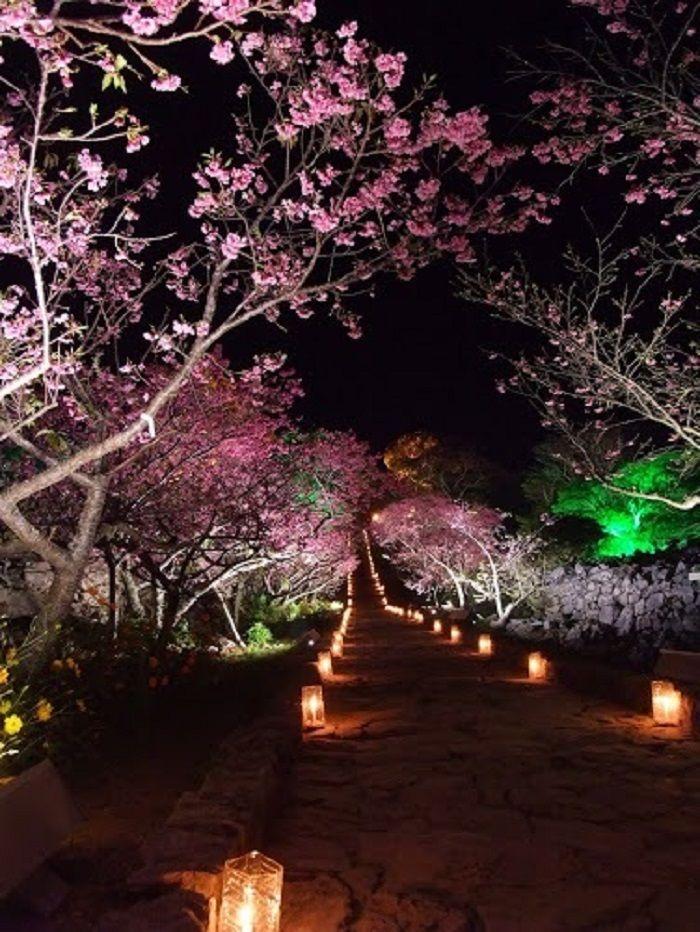 悠久の時を感じる遺跡と夜桜ライトアップの共演は幻想的