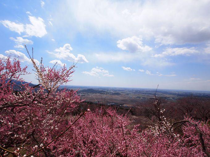 みんなおいでよ!花咲く明るい筑波山へ