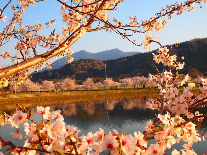 華やぐ里山の春