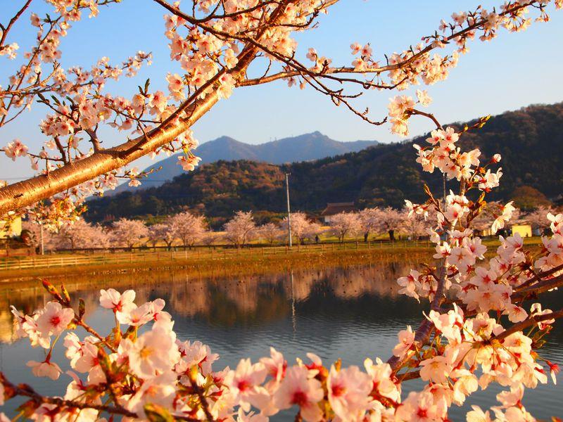 山笑う春の筑波山「山あり!花あり!神様あり!!」春の陽だまりハイキング