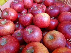 奥久慈の樹上完熟りんごと贅沢アップルパイを求めて大子町へ