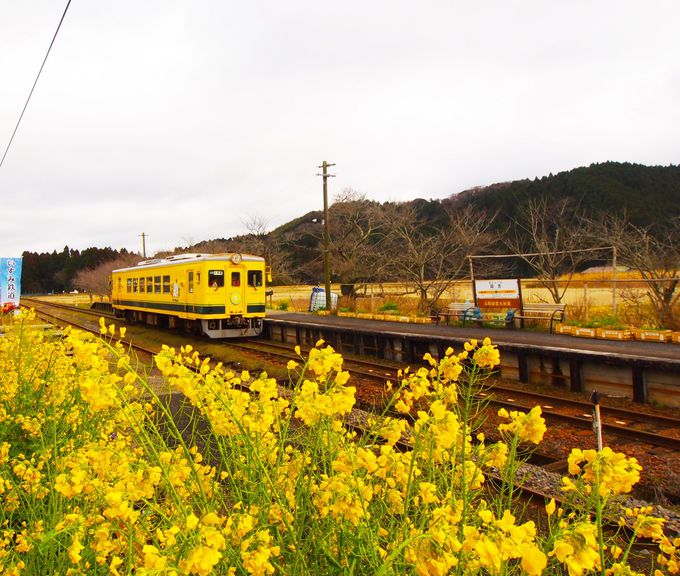 菜の花色のいすみ鉄道「ムーミン列車」は、可愛いがいっぱい♪