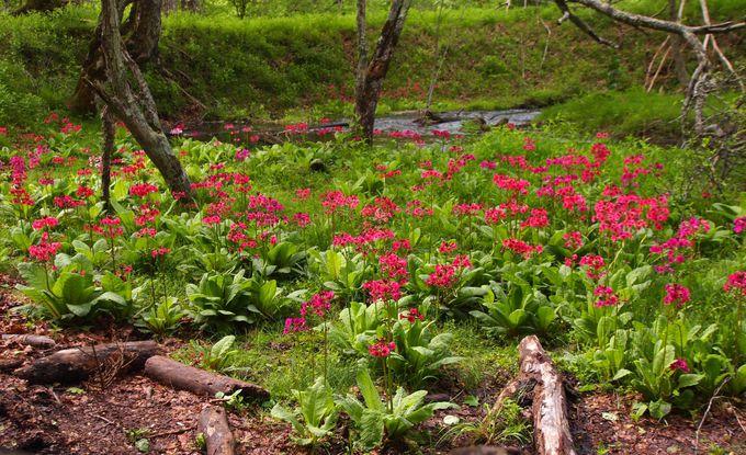 中禅寺湖の美しさに出会うなら千手ヶ浜!!特に6月がおすすめ!!
