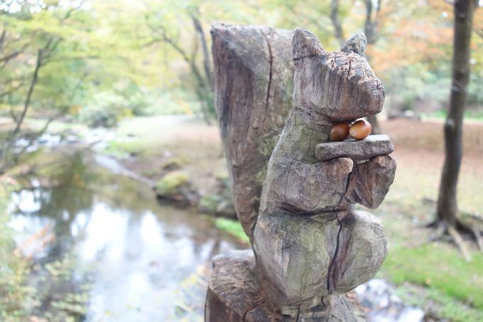 森のコンシェルジュと歩く「朝の散歩」