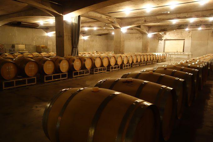700坪の地下ワインセラー見学の終点は、SADOYAの宝が眠る場所