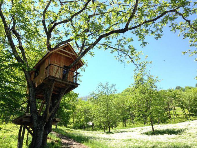泊まってこそ味わえるお花畑の絶景をお楽しみください