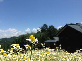 お花畑に泊まろう!安曇野「カミツレの宿 八寿恵荘」は10万本のカミツレの花が咲く|長野県|トラベルjp<たびねす>