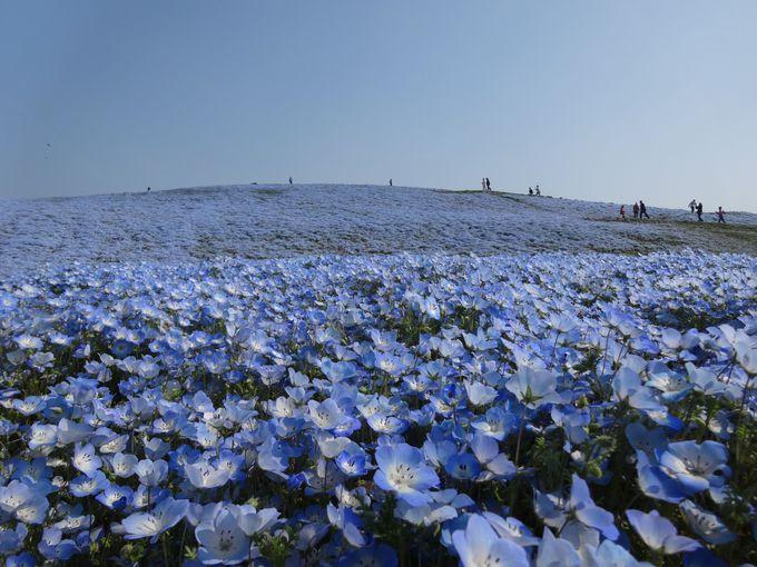 青の世界を満喫♪丘の上までおさんぽ