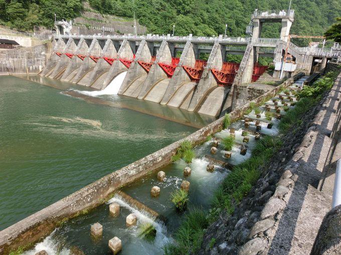 水と緑の競演、庄川渓 天然の地物鮎は絶品!