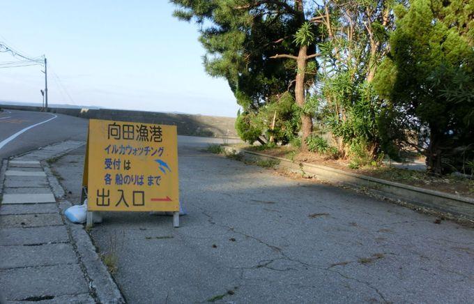 穏やかな七尾湾は、世界最北の野生のイルカ生息地!