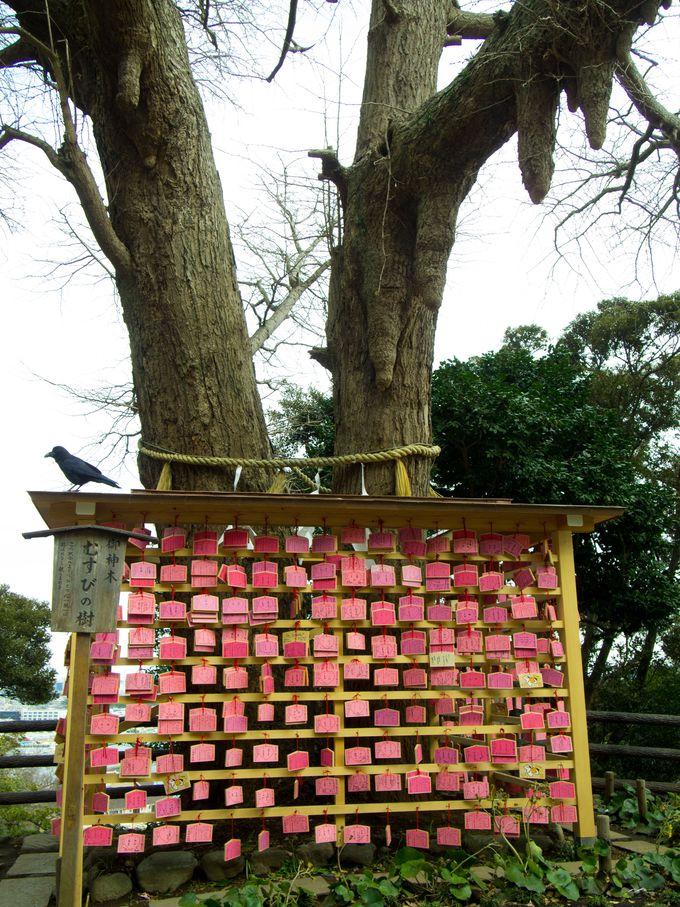 ピンク色の絵馬があちこちに!「むすびの樹」は恋愛運UPの期待大