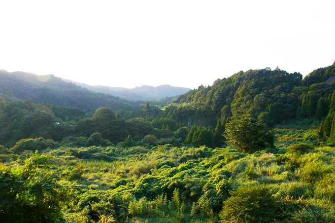渓谷の深い森