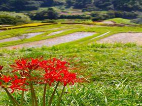一足早く実りの秋を迎えた大山千枚田——千葉県鴨川市