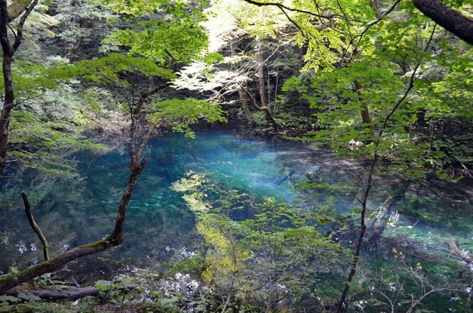 透明度の高い沸壺の池