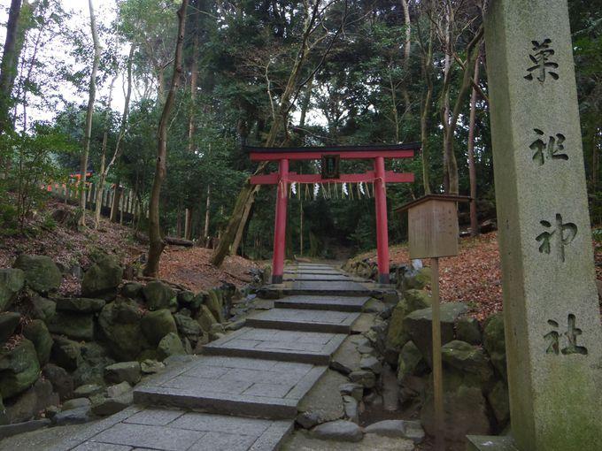 吉田山でハイキングしよう!