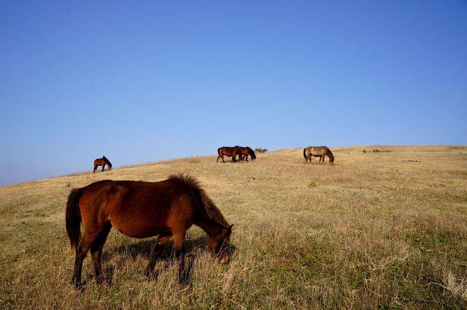 「駒止の門」を抜けると、そこは御崎馬の楽園!