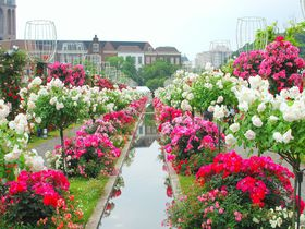 ハウステンボスがバラの洪水!まるでおとぎの国「100万本のバラ祭」