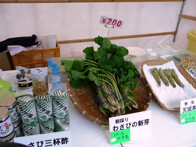 「ワサビ」や「河津桜の苗」など、地元特産品を販売する露店散策も楽しい!