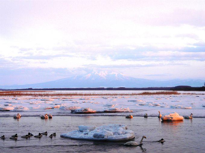 北浜駅近く、白鳥が飛来する濤沸湖(トウフツコ)へ