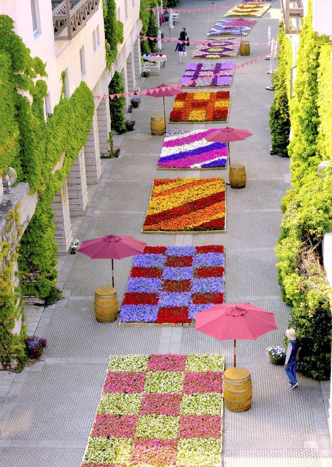 異国情緒あふれる石畳の通りに鮮やかな花の絨毯が出現!