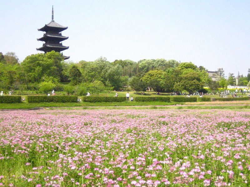 歴史・自然・天然温泉から天然記念物まで!?吉備路・岡山県総社市で過ごす休日