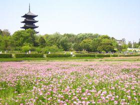 歴史・自然・天然温泉から天然記念物まで!?吉備路・岡山県総社市で過ごす休日|岡山県|トラベルjp<たびねす>