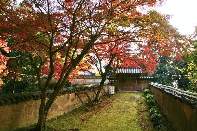 苔むす古道に赤い紅葉