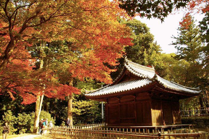 小堂の紅葉こそ書写山圓教寺の秋