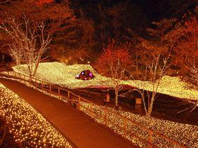 関西にイルミネーションの新名所が誕生!ネスタリゾート神戸|兵庫県|トラベルjp<たびねす>
