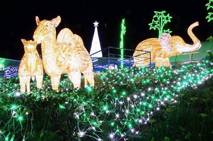 冬の夜は須磨海浜水族園!イルカも一緒に神戸須磨アクアイルミナージュ