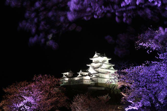 定番お花見スポット、姫路城三の丸広場