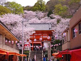 和歌山・紀三井寺の桜まつり、関西に早咲き桜の名所が告げる春