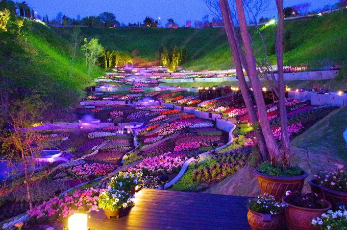 「ネスタリゾート神戸」の夜は「ネスタフローラ」で。ライトアップと音のショーに注目!