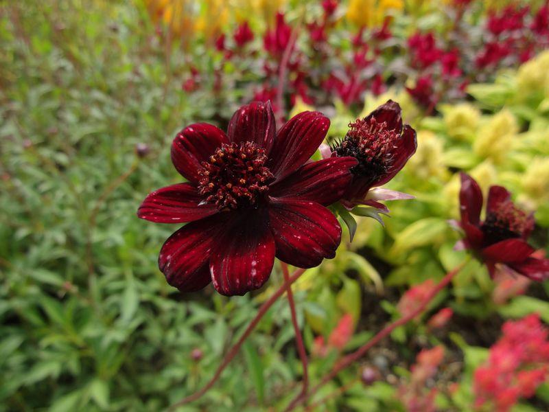 花と緑とジブリに触れる!愛知「モリコロパーク」で発見のある旅を
