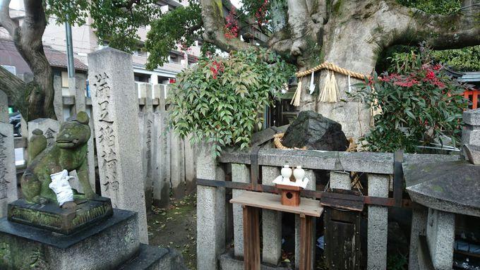 霊験あらたかな「岩神さん」に縁起の良い「モチの木」!見守る狛狐さんも風格あり