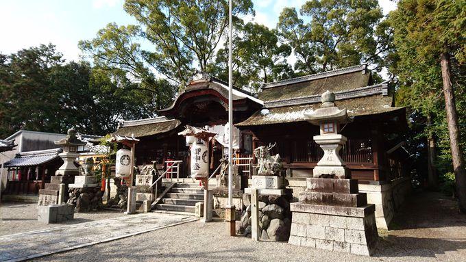 本殿前でもお出迎え!鹿と柿が立木神社の立役者