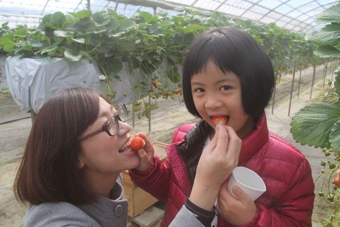 もぎたて新鮮!!香川のご当地イチゴ『さぬきひめ』♪