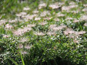 ビギナーもOK!可愛い高山植物に癒される「立山トレッキング」