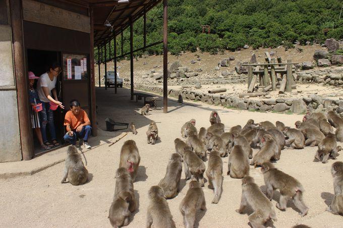 数え切れないほどのお猿さんたちが大集合!豆まきみたいな「エサやり」