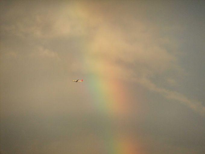 虹とのコラボレーション