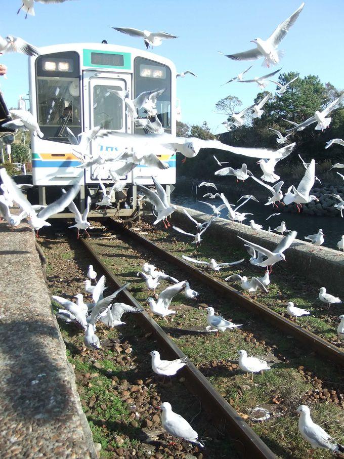 電車が見えないくらいになるユリカモメ達!