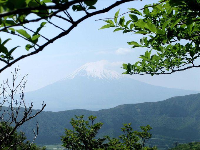富士山ビューポイントで大パノラマの景色を堪能