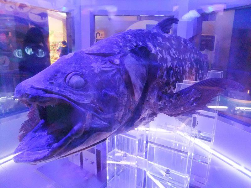 幸せを呼ぶシーラカンス展示と深海の世界が楽しい沼津港深海水族館!