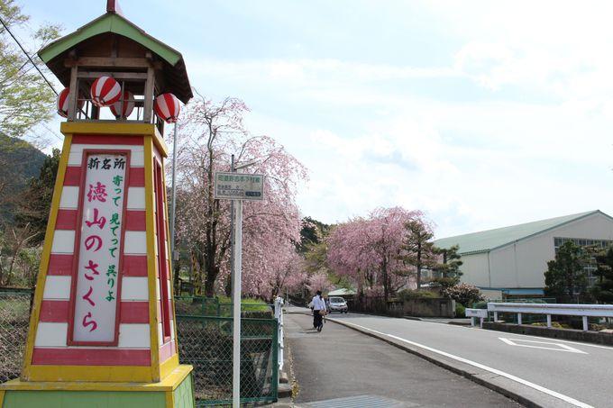 桜スポットへのアクセスについて
