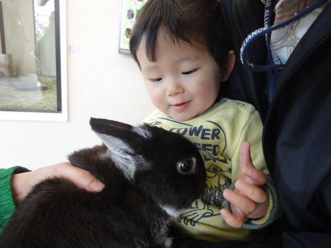 お花見のあとは動物さんに会いに行こう!平安神宮から徒歩5分!日々進化中の京都市動物園へGO!