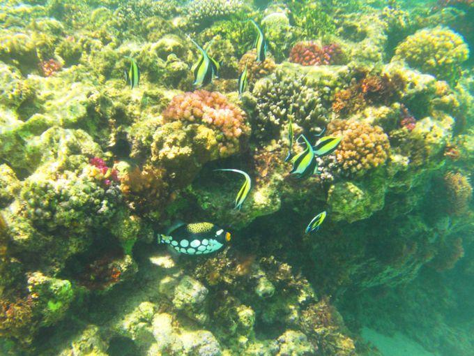 南国の魚達が色鮮やかな理由とは?!水中写真にも挑戦してみよう!