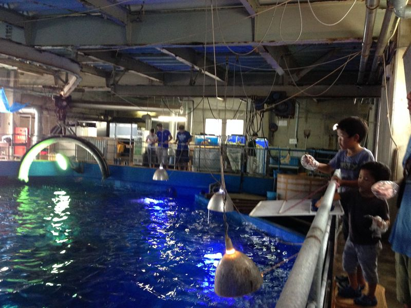 和歌山県・串本海中公園水族館で「マグロのエサやり体験」!