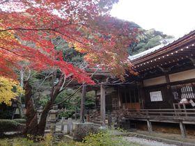 西行ゆかりの古刹、京都・花の寺「勝持寺」は紅葉もお勧め!