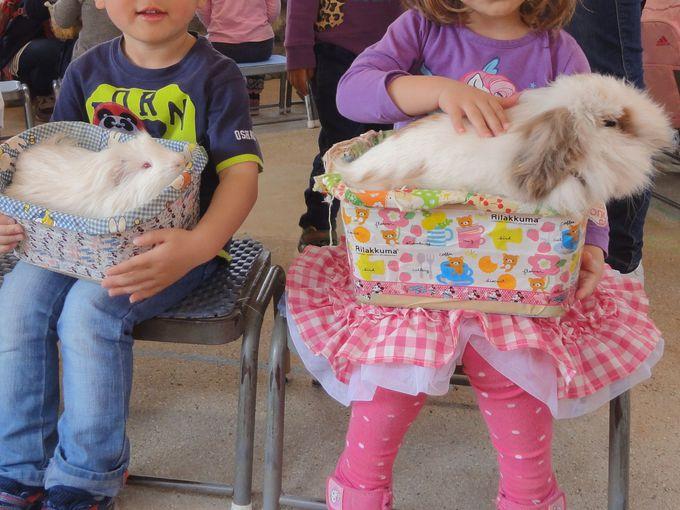 ふわふわのウサギちゃんやアヒル、ヤギに触れ合える人気エリア!